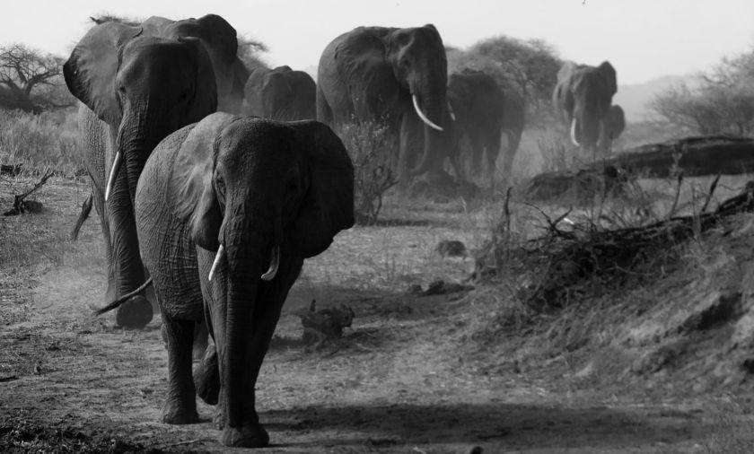 (Dorobo Tours and Safaris)