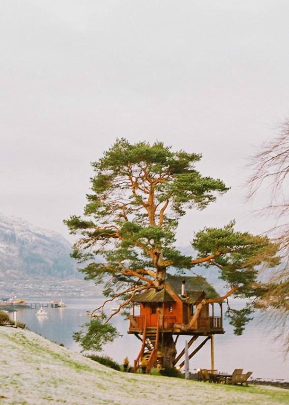 Rent This Scottish Treehouse
