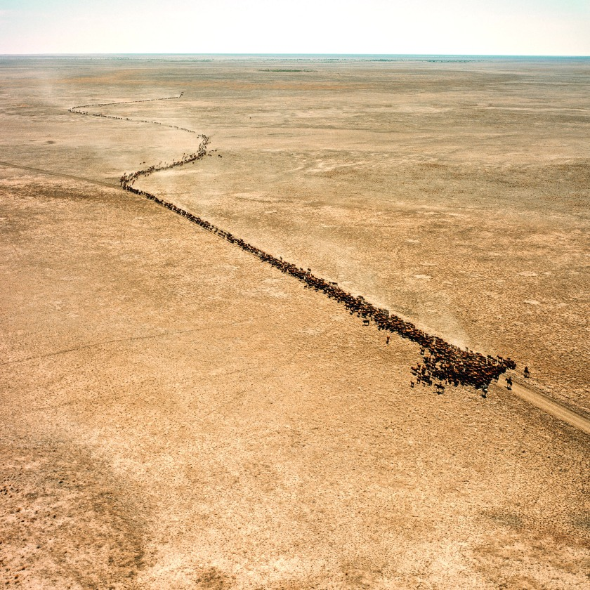 Mustering on Barkly Tableland. (Balls and Bulldust by Hakan Ludwigson, publishd by Steidl)