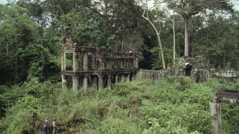 Cambodian Jungle