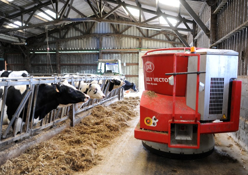 A feeding robot automatically feeds Prim'Holsteins dairy cows in Erbree, western France. (Jeam-Francois Monier/AFP/Getty Images)