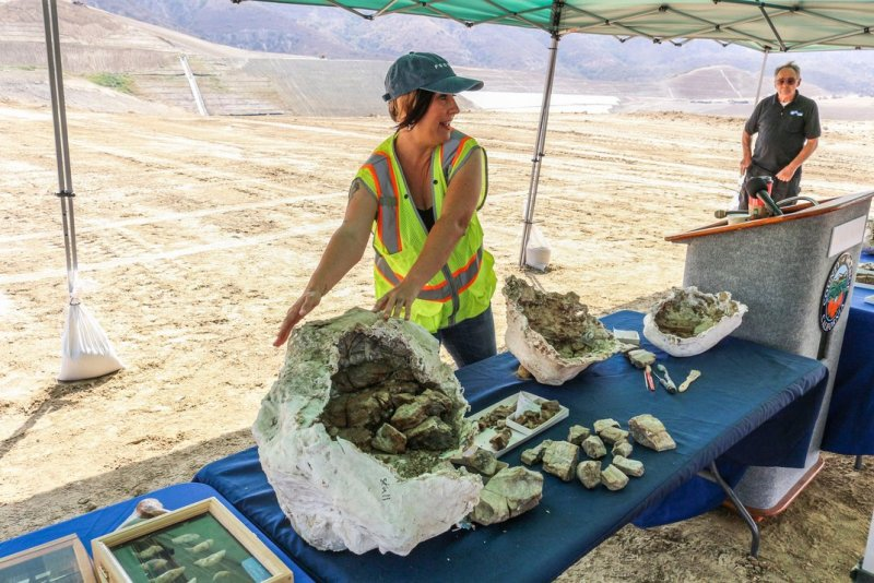 Paleontologist Melissa Macias shows some the fossil dins to members of the press with Dr. Lipps in the background. (Courtesy Orange County)