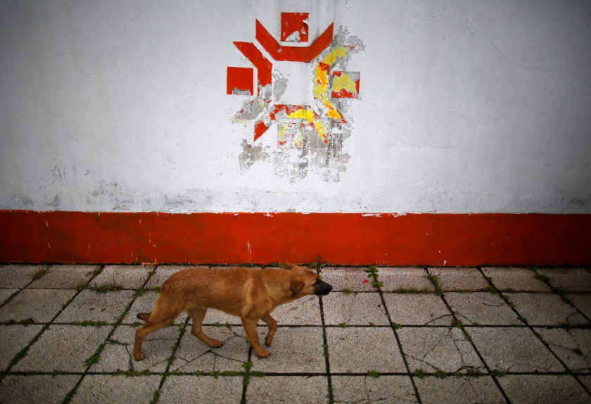 A dog walks past the Olympic snowflake logo on the wall of the Kosevo stadium, the venue of the opening ceremony for the 1984 Winter Olympics in Sarajevo September 19, 2013. Abandoned and left to crumble into oblivion, most of the 1984 Winter Olympic venues in Bosnia's capital Sarajevo have been reduced to rubble by neglect as much as the 1990s conflict that tore apart the former Yugoslavia. The bobsleigh and luge track at Mount Trebevic, the Mount Igman ski jumping course and accompanying objects are now decomposing into obscurity. The bobsleigh and luge track, which was also used for World Cup competitions after the Olympics, became a Bosnian-Serb artillery stronghold during the war and is nowadays a target of frequent vandalism. The clock is now ticking towards the 2014 Winter Olympics, with October 29 marking 100 days to the opening of the Games in the Russian city of Sochi. Picture taken on September 19, 2013. REUTERS/Dado Ruvic (BOSNIA AND HERZEGOVINA - Tags: SOCIETY SPORT OLYMPICS ANIMALS BUSINESS LOGO) ATTENTION EDITORS: PICTURE 05 OF 23 FOR PACKAGE 'SARAJEVO'S WINTER OLYMPIC LEGACY'. TO FIND ALL IMAGES SEARCH 'DADO IGMAN' - RTX14SC0