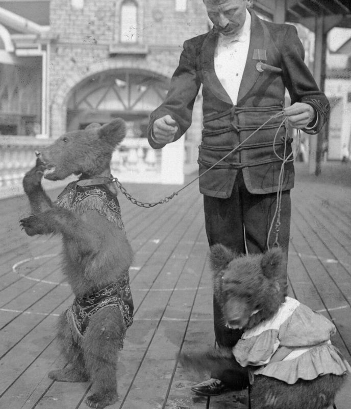 (Original Caption) New York, NY: The Roosevelt bears at Coney Island. Undated photograph. (Photo by George Rinhart/Corbis via Getty Images)