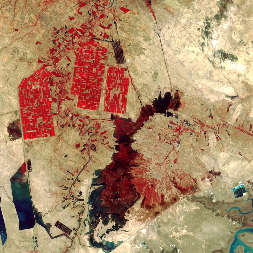 What appear to be smatterings of paint on a wall represent an amalgam of human-made and natural features in southwestern Iran. The dark red shape in the center of the image is Shadegan Pond, which is the northern part of the larger Shadegan Wetlands. Red areas depict actively growing vegetation, and the rectangular shapes in the upper left reveal irrigated farmland.(USGS/NASA)