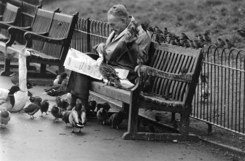 1976: Mr James Cripps, who has fed the pigeons and other birds in St. James Park since he was fifteen years of age. (Evening Standard/Getty Images)