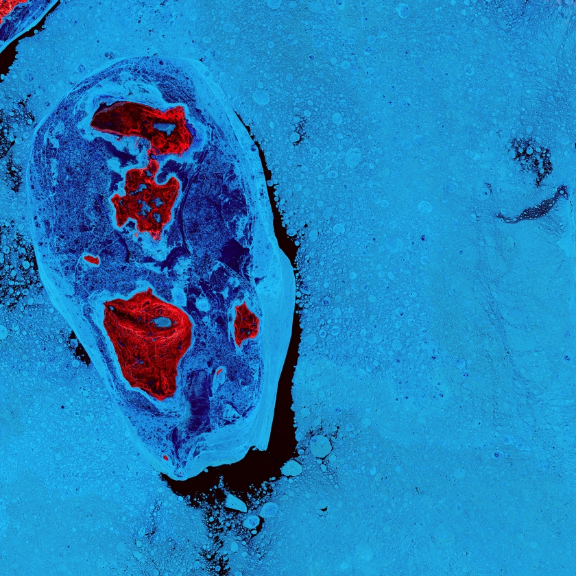 The ice surrounding the northern Canadian Spicer Islands, shown in bright red, resembles a cell, complete with ribosomes, mitochondria, and a nucleus. Even though the image was captured shortly after the first day of summer in the Northern Hemisphere, the islands are locked in ice. (USGS/NASA)