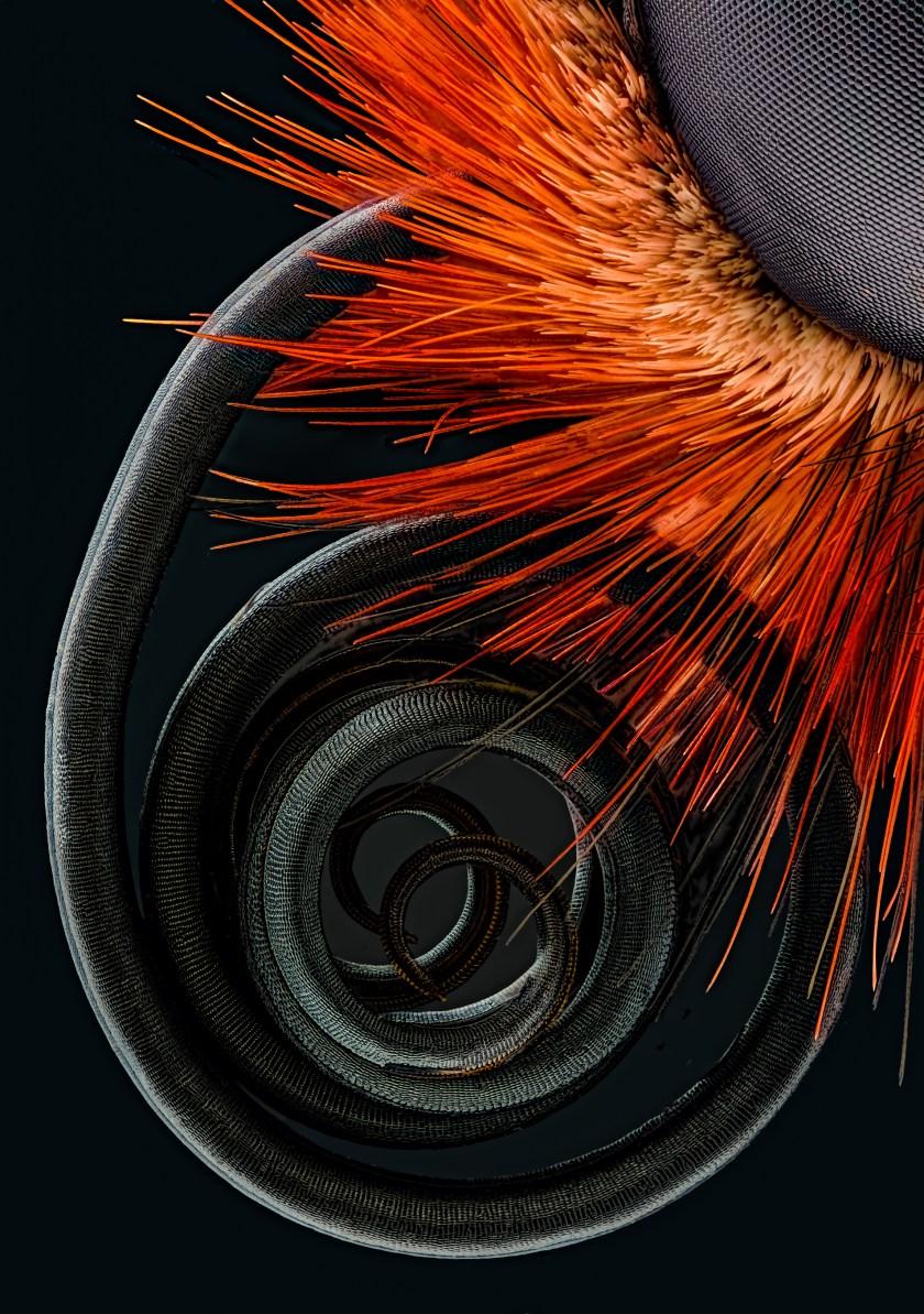 Butterfly proboscis (Jochen Schroeder )
