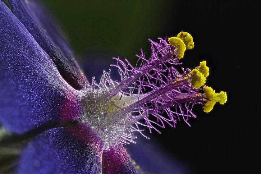 Wildflower stamens (Samuel Silberman)