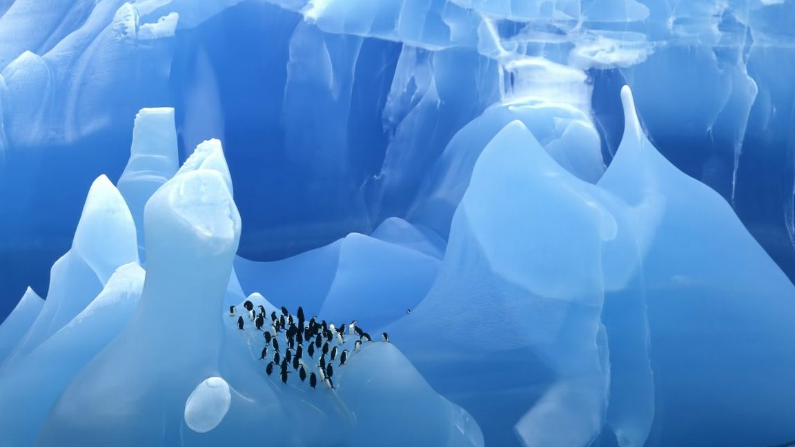 Rare Blue Iceberg with Chinstrap Penguins ( Pygoscelis antarcticus ) Scotia Sea, Antarctica