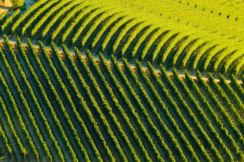 Aerial view of Italian vineyard (Getty Images)