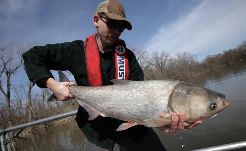 Steve Tyscko holds a carp in Havana, Illinois March 11, 2011. ( John Gress/Corbis via Getty Images)