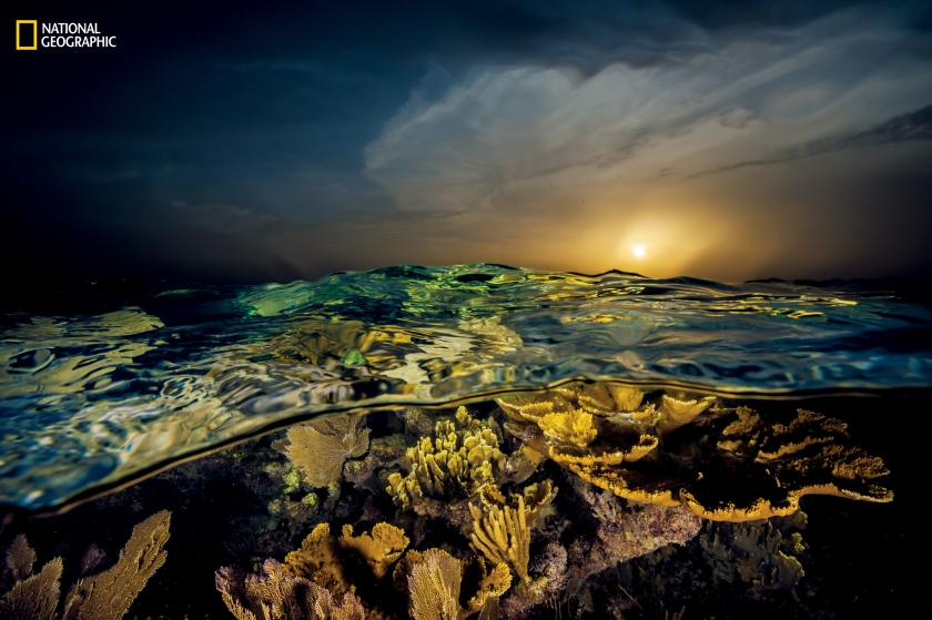 """""""Sunset casts a golden glow"""" over corals flourishing off the country's southern coast. Named by Christopher Columbus in honor of Queen Isabella, this remote set of keys, mangroves, and reefs appears nearly unchanged by time and human hand."""" (David Doubilet and Jennifer Hayes / National Geographic)"""