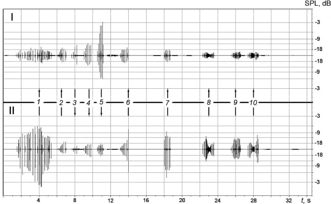 Example of the recordings displaying the sequence of the NP packs produced by the dolphins (Vyacheslav A. Ryabov/Physics and Mathematics)