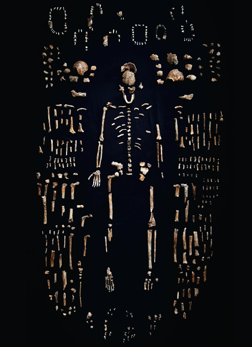 Remains of Homo naledi from the Rising Star Cave in South Africa (Robert Clark/Published by Phaidon)