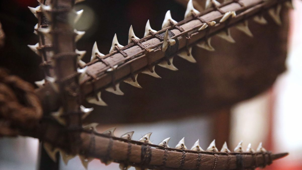 Detail of an ancient shark tooth sword from the South Pacific are displayed as part of the Arts of War exhibit at the Peabody Museum of Archaeology & Ethnology at Harvard University in Cambridge, Mass., Thursday, Oct. 13, 2016. The Peabody, one of the oldest and largest museums in the world focused on the study of societies and cultures, turns 150 years old this month. (AP Photo/Charles Krupa)