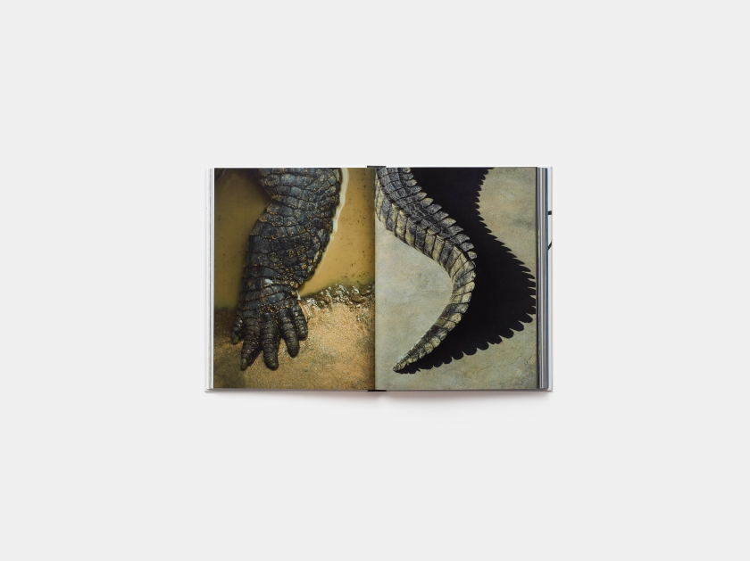 From left: The five-toed foot of a saltwater crocodile and the tail of the same creature (Robert Clark/Published by Phaidon)