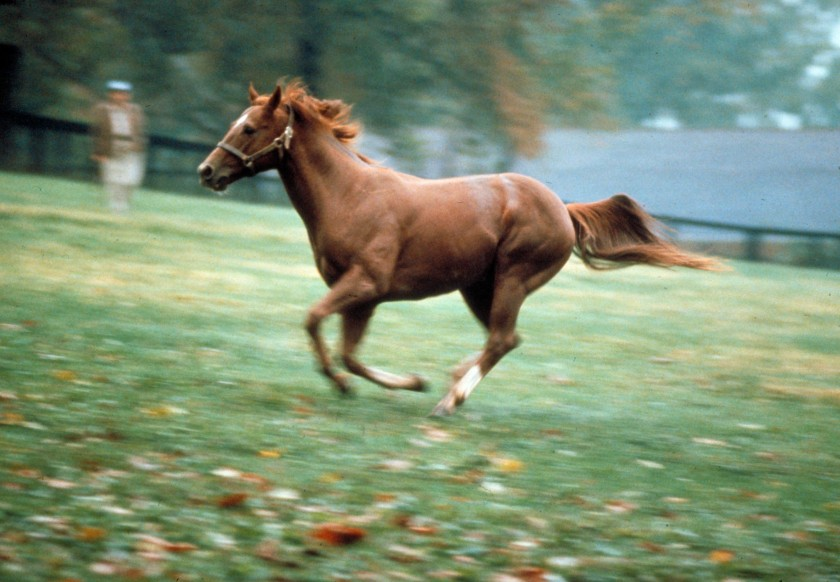 Portrait of racehorse Secretariat running in field. (George Silk/The LIFE Images Collection/Getty Images)
