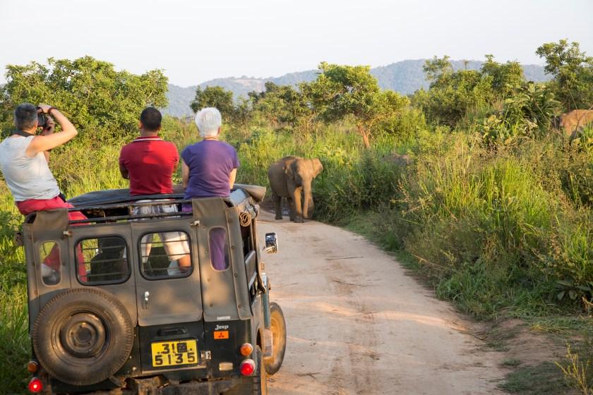 Tourists on safari in Sri Lanka (GeographyPhotos/UIG via Getty Images)