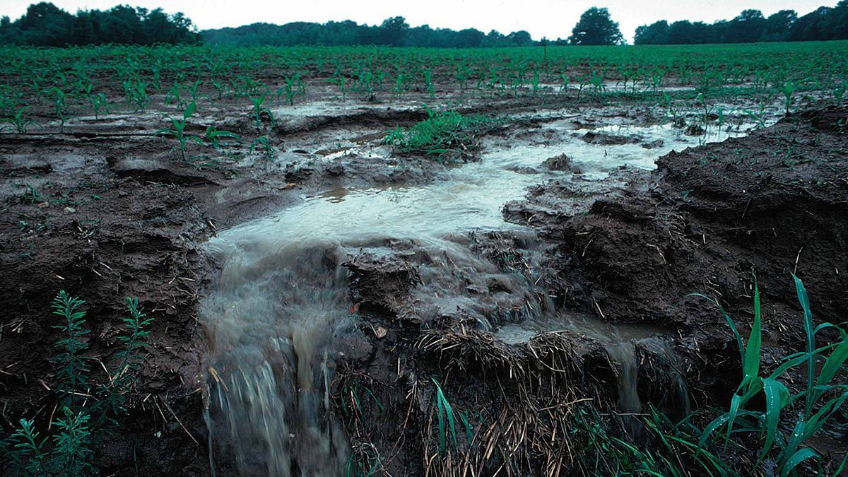 Rainfall runoff following fertilizer applications on farm fields can cause nutrient loss, potentially polluting waterways. (Penn State/Flikr)
