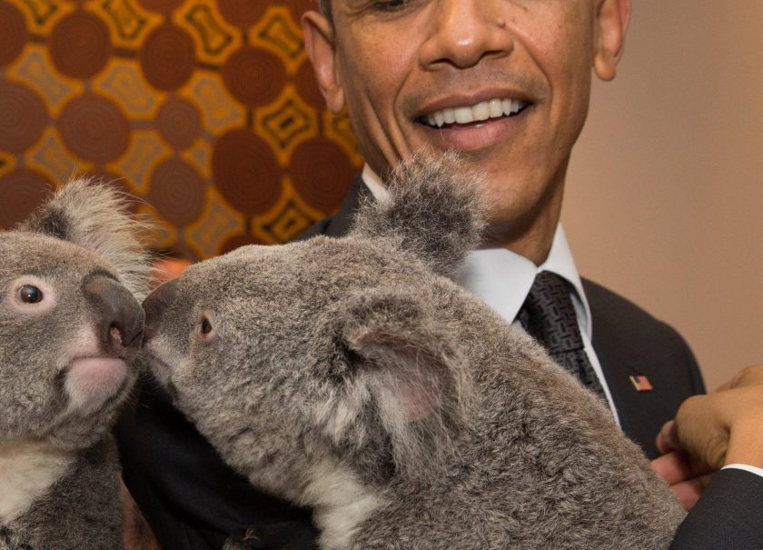 In this handout photo provided by the G20 Australia, Australia's Prime Minister Tony Abbott and United States' President Barack Obama meet Jimbelung the koala before the start of the first G20 meeting on November 15, 2014 in Brisbane, Australia. (Andrew Taylor/G20 Australia via Getty Images)