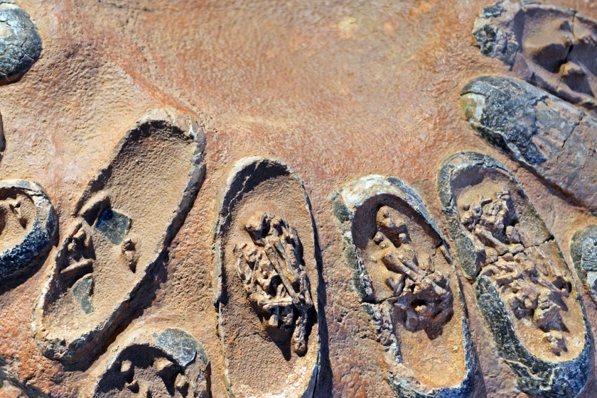 Fossilized dinosaur eggs (Getty Images)