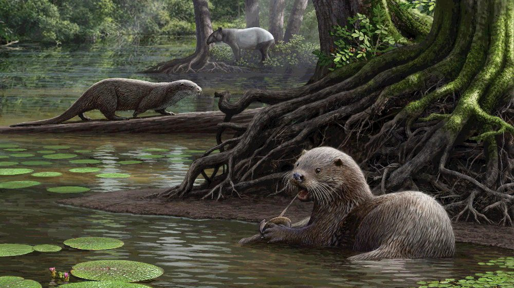 Giant Prehistoric Otter Discovered in China