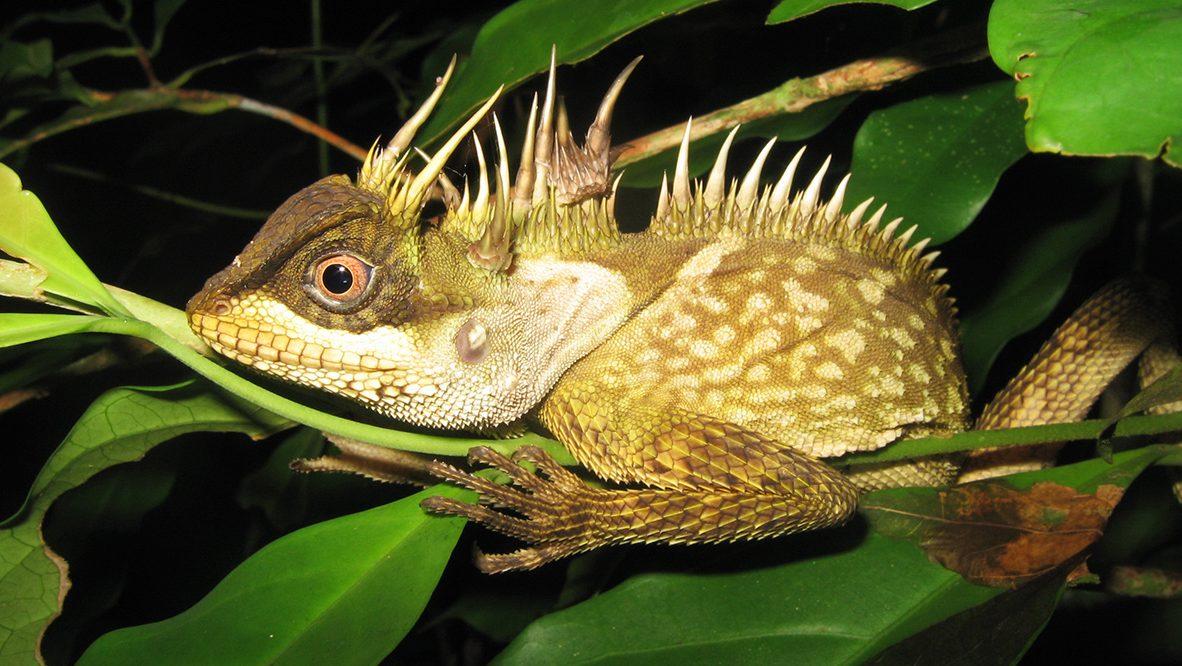 Mekong New Species