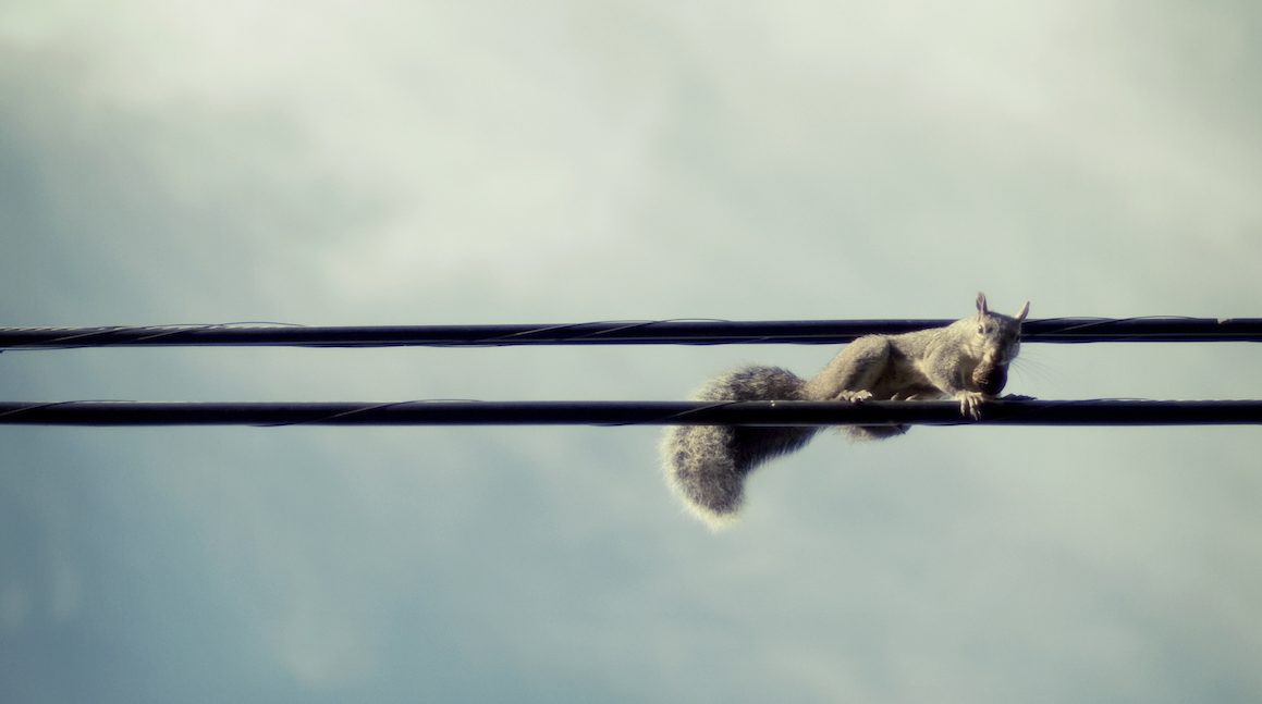 squirrel, wires, telephone wires, electric wires, nut, bushy, tail, animal, sky, clouds, balance, high wires,