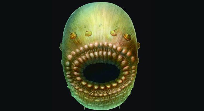 An artist's rendering, based on fossil records, of Saccorhytus coronarius, the oldest known human ancestor (Simon Conway Morris, Jian Han, et al.)
