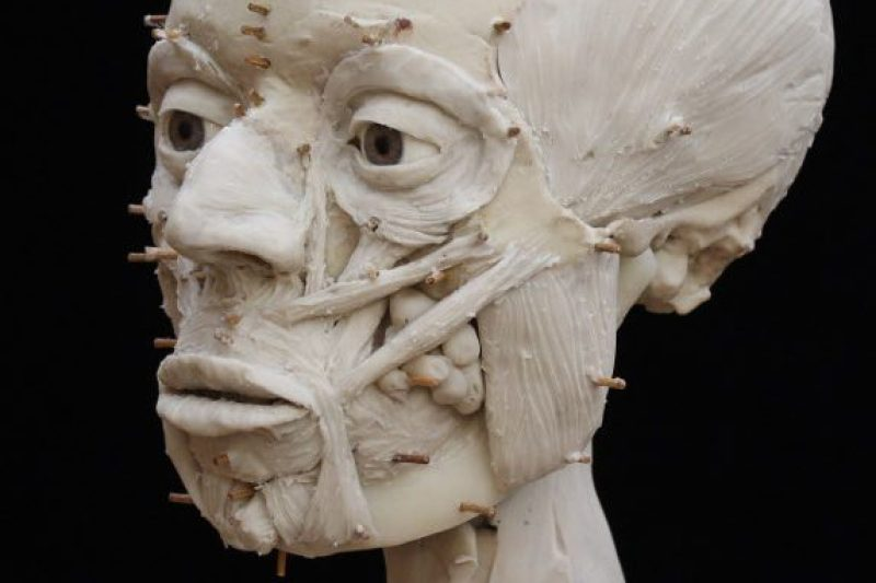 The face is re-built in clay muscle-by-muscle. (Trustees of the British Museum/RN-DS partnership)