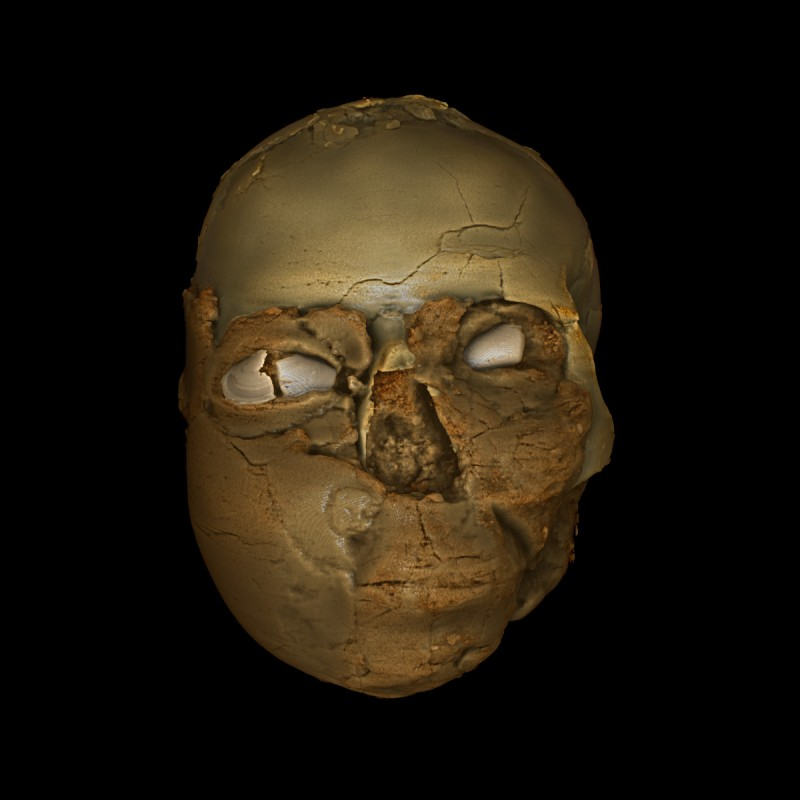 The 3D printed model of the cranium with teeth and a new lower jaw added. Bent bone inside the nose cavity shows this was broken and healed (Trustees of the British Museum/RN-DS partnership)