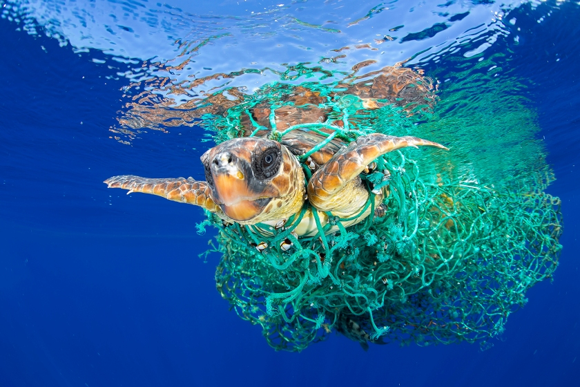 Nature - First Prize, Singles: A sea turtle entangled in a fishing net swims off the coast of Tenerife, Canary Islands, Spain, on 8 June 2016. Sea turtles are considered a vulnerable species by the International Union for Conservation of Nature. Unattended fishing gear is responsible for many sea turtle deaths. (Francis Pérez)