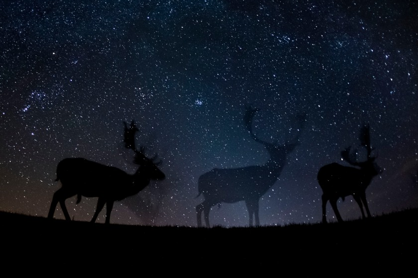 Nature - Third Prize, Stories: Fallow deer walk in the silence of the night. These photos combine a well-known natural phenomenon: the starry sky and portraits of wild animals not visible to the naked eye. The series needed very accurate planning, research and preparation as the photos were made with remote control, and no modification was possible while capturing the photos. (Bence Máté)