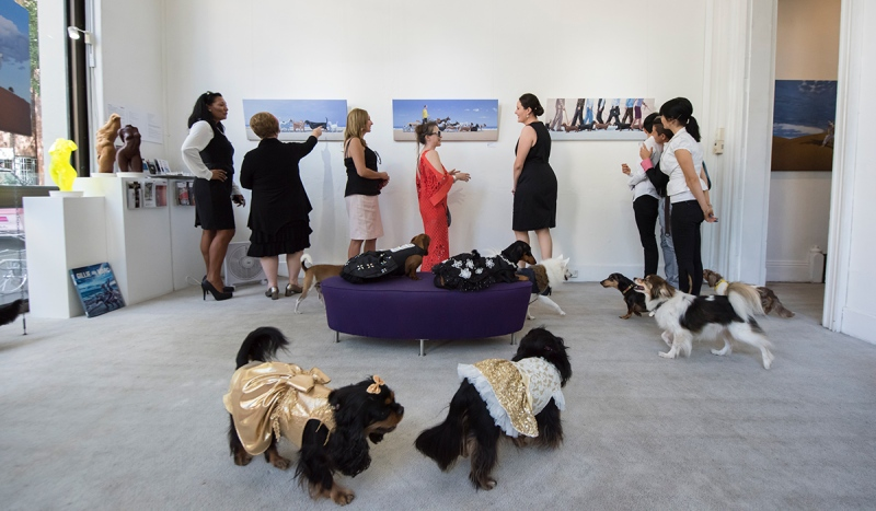 Dogs and their owners attend an event at the Soho Galleries on March 11, 2017 in Sydney, Australia. (James D. Morgan/Getty Images)