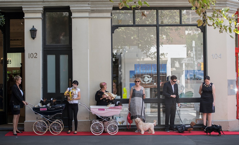 Dogs wait with their owners on a red carpet outside the Soho Galleries on March 11, 2017 in Sydney, Australia. ( James D. Morgan/Getty Images)