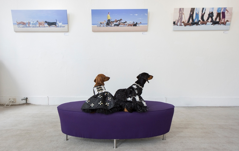 Avalon and Maluka, minature dachshunds inside the Soho Galleries on March 11, 2017 in Sydney, Australia. (James D. Morgan/Getty Images)