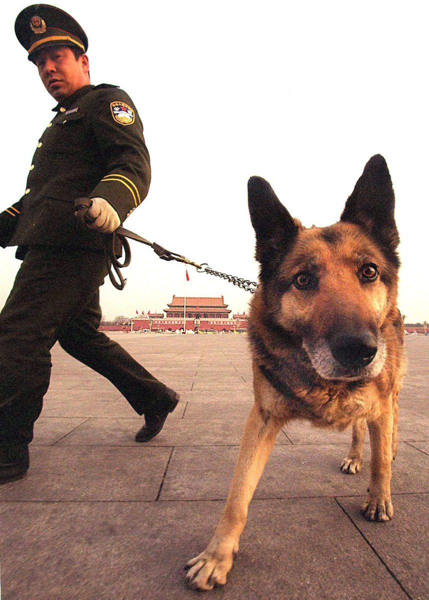 BEIJING, CHINA: A policeman and his bomb-sniffing dog check around Tiananmen Square and the Great Hall of the People for any suspicious packages or traces of explosives prior to the opening session of the National People's Congress (STEPHEN SHAVER/AFP/Getty Images)