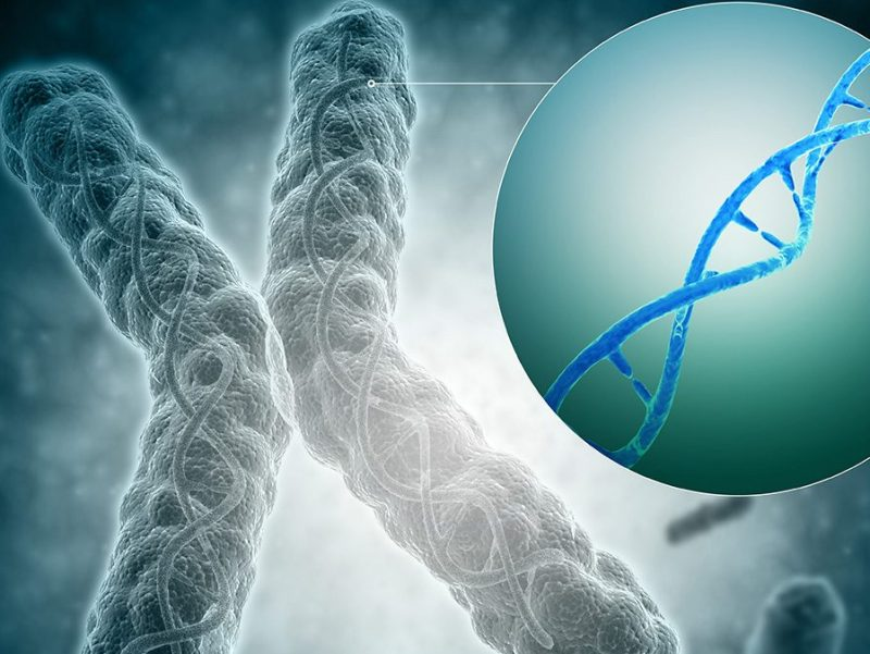 A telomere is a region of the DNA sequence at the end of a chromosome. Their function is to protect the ends of the chromosome from degradation. (Getty Images)