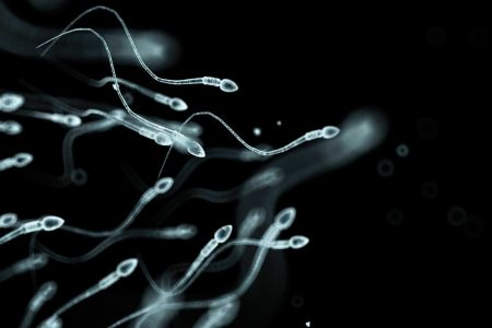 Sperm under microscope
