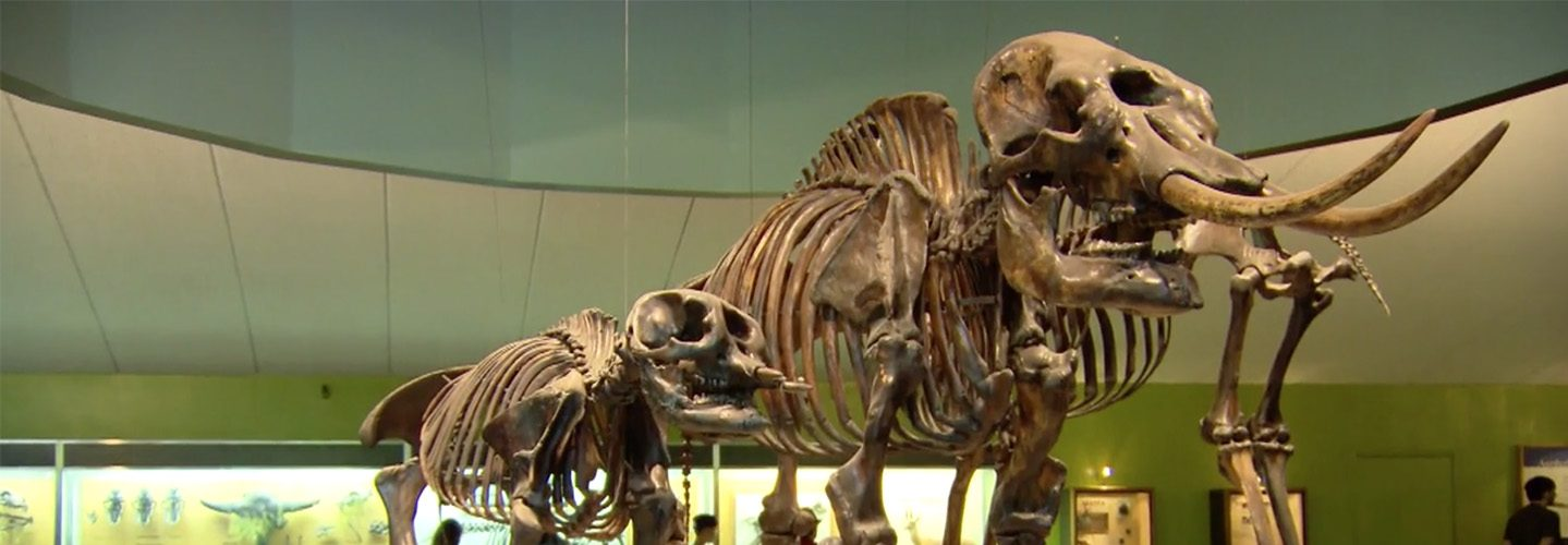 Fossils were recently discovered a mile away from the La Brea Tar Pit museum in Los Angeles, CA
