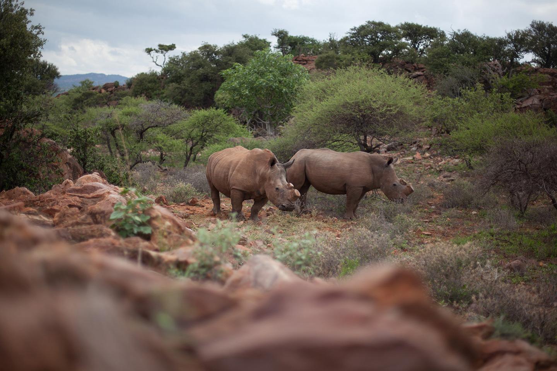 Meet Ryan Tate, ex-Marine Fighting African Poaching One Tusk at a Time