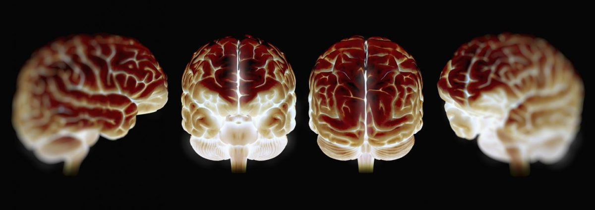 Four illuminated models of the human brain. (Science Picture Co/Getty.)