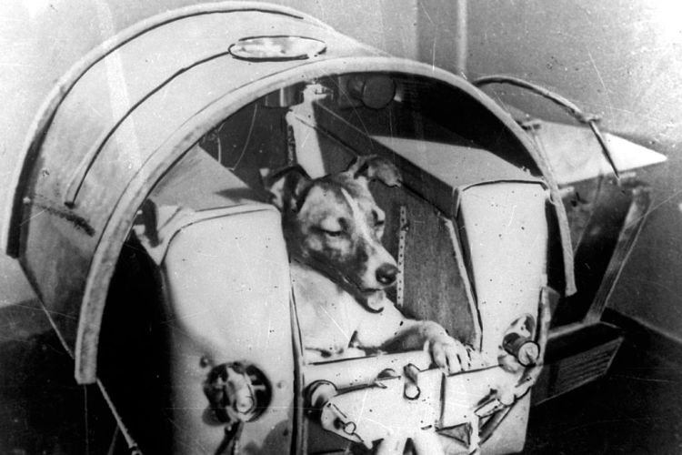 "Dog ""Laika"" in her cabin shortly before it was installed into Sputnik II (ullstein bild/ullstein bild via Getty Images)"