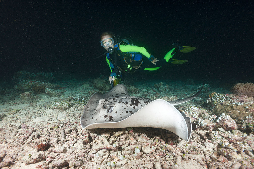 A night diver comes across Blotched Fantail Stingray in Taeniura meyeni, Maya Thila, North Ari Atoll, Maldives  (Photo by Reinhard Dirscherl/ullstein bild via Getty Images)