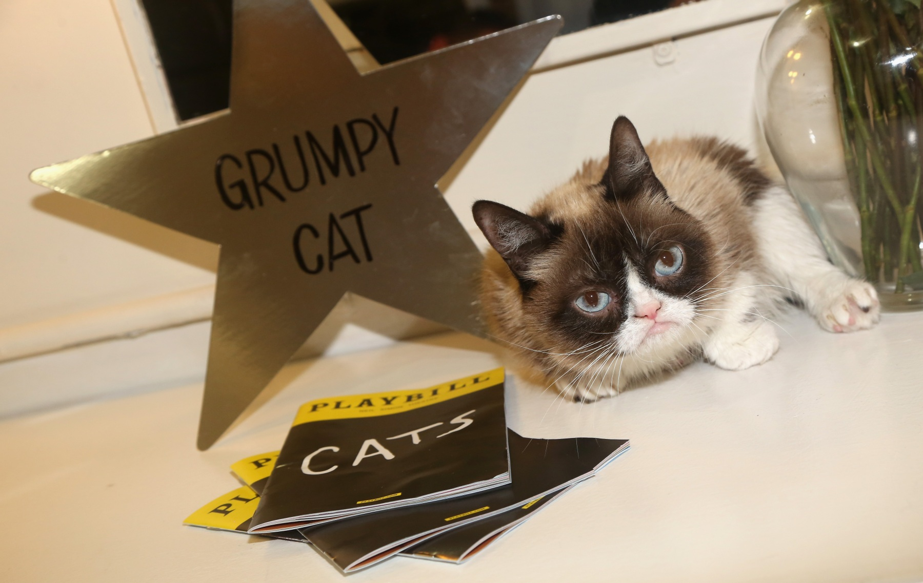 """NEW YORK, NY - SEPTEMBER 30:  (EXCLUSIVE COVERAGE) Grumpy Cat relaxes in her dressing room as she makes her broadway debut in """"Cats"""" on Broadway at The Neil Simon Theatre on September 30, 2016 in New York City.  (Photo by Bruce Glikas/FilmMagic)"""