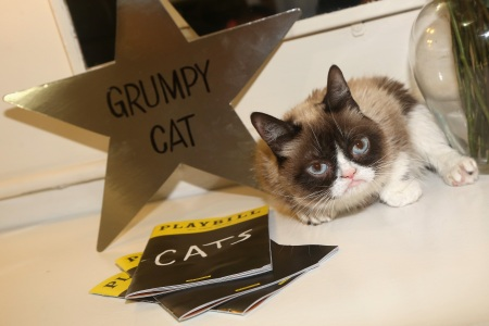 "NEW YORK, NY - SEPTEMBER 30:  (EXCLUSIVE COVERAGE) Grumpy Cat relaxes in her dressing room as she makes her broadway debut in ""Cats"" on Broadway at The Neil Simon Theatre on September 30, 2016 in New York City.  (Photo by Bruce Glikas/FilmMagic)"