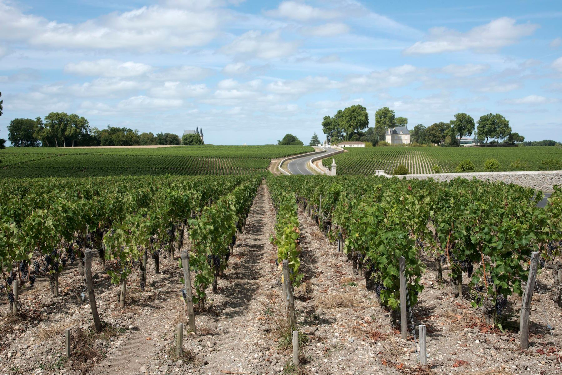 Pauillac wine region France, Vines and vineyards in Pauillac a wine producing area of the Bordeaux region France. (Photo by: Education Images/UIG via Getty Images)