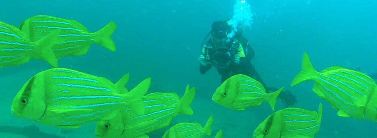 Diving at Cabo Pulmo (Kinga Philipps)