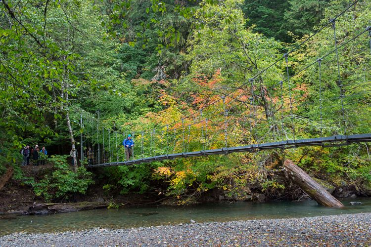WASHINGTON, UNITED STATES - 2016/09/23: A simple suspension bridge (also rope bridge, hanging bridge) crosses over a channel of the Ohanapecosh River at the Grove of the Patriarchs in Mt. Rainier National Park in Washington State, USA. (Getty Images)
